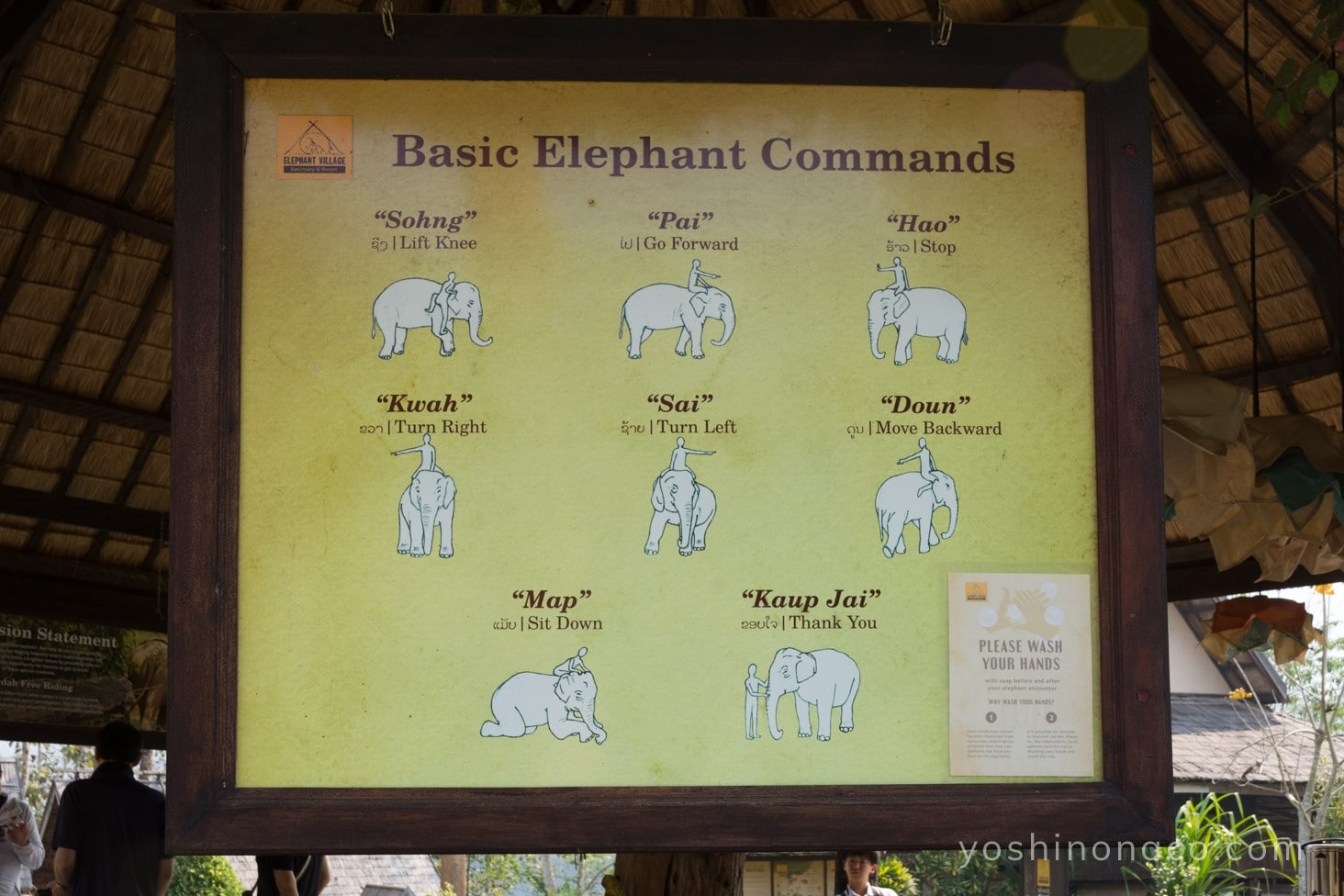 ラオス 象使いの免許取得