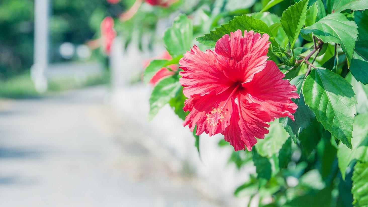 旅と写真と文章と 沖縄写真展